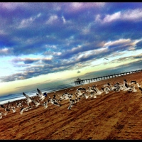 Taking Flight: Manhattan/Hermosa Beach CA