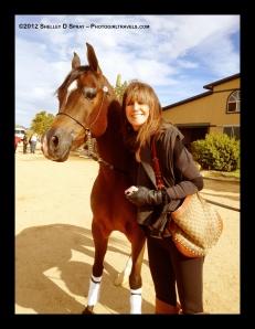 arabian horse_photogirltravels_1