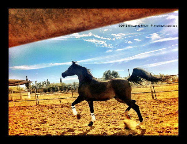arabian horse_photogirltravels_10