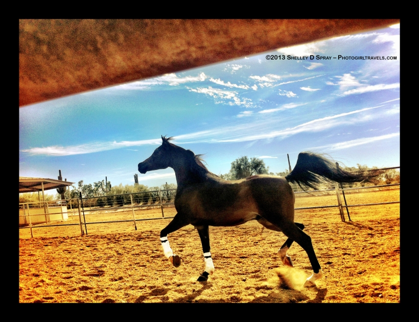 arabian horse_photogirltravels_10