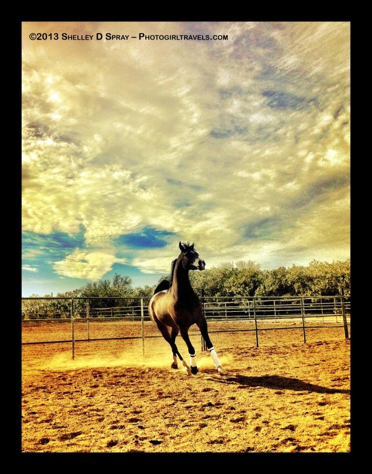arabian horse_photogirltravels_12