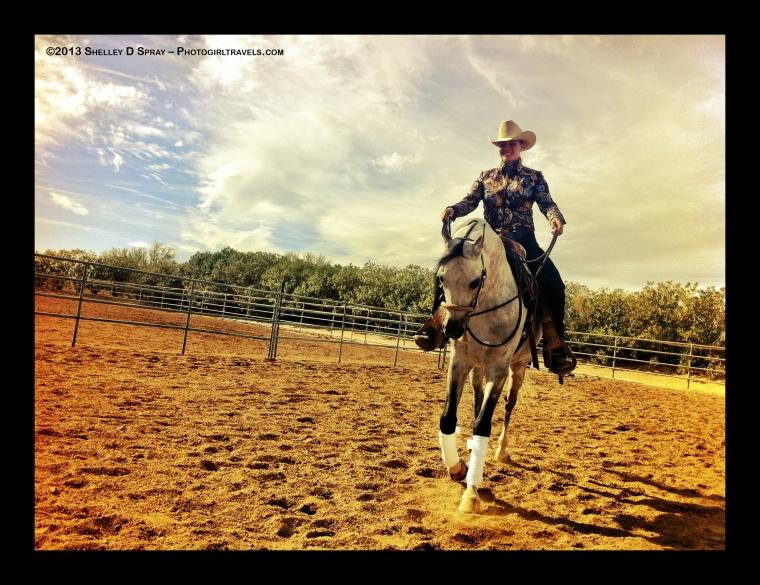 arabian horse_photogirltravels_17