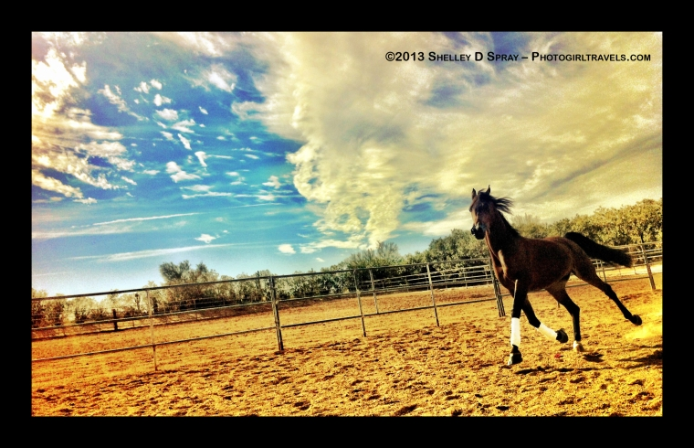 arabian horse_photogirltravels_2
