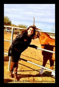 arabian horse_photogirltravels_22