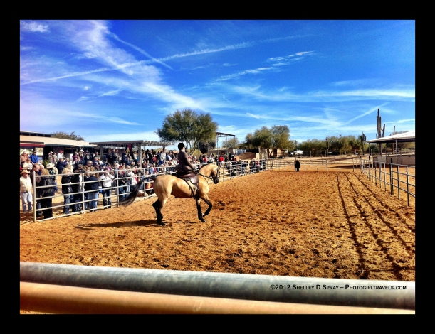 arabian horse_photogirltravels_5