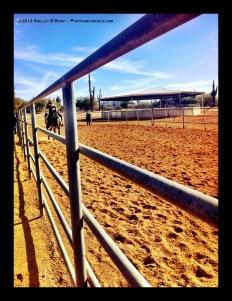 arabian horse_photogirltravels_6