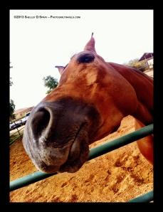 arabian horse_photogirltravels_8