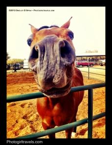 arabian horse_photogirltravels_9