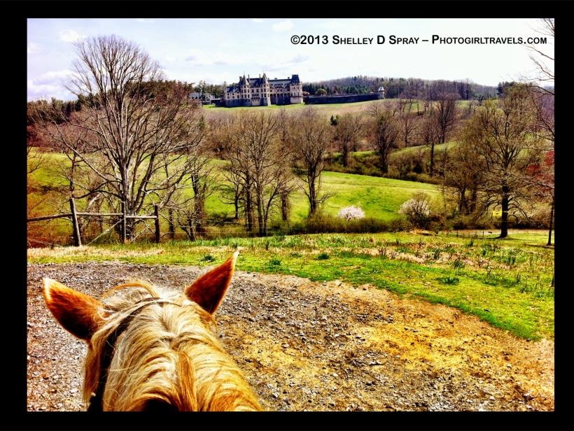 Biltmore_photogirltravels.com_horse1