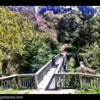 Road Trip to Carmel: The Secret Forest