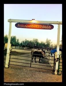 Horses having a bit of dinner before their sunset ride
