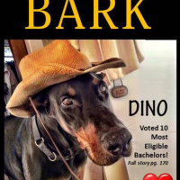 Dino's 1 Year Anniversary as Cover Model!